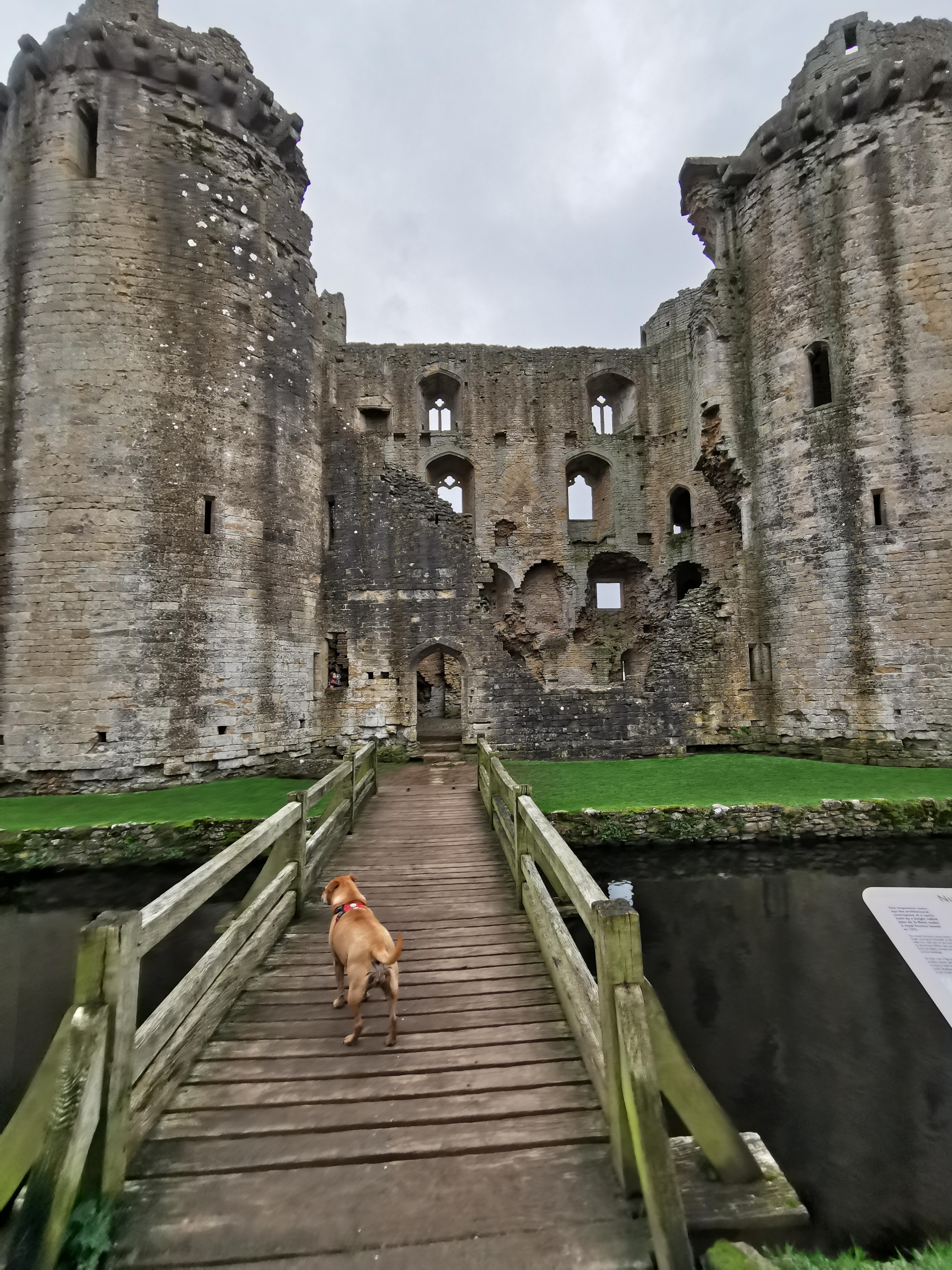 Dog-friendly Nunney Castle