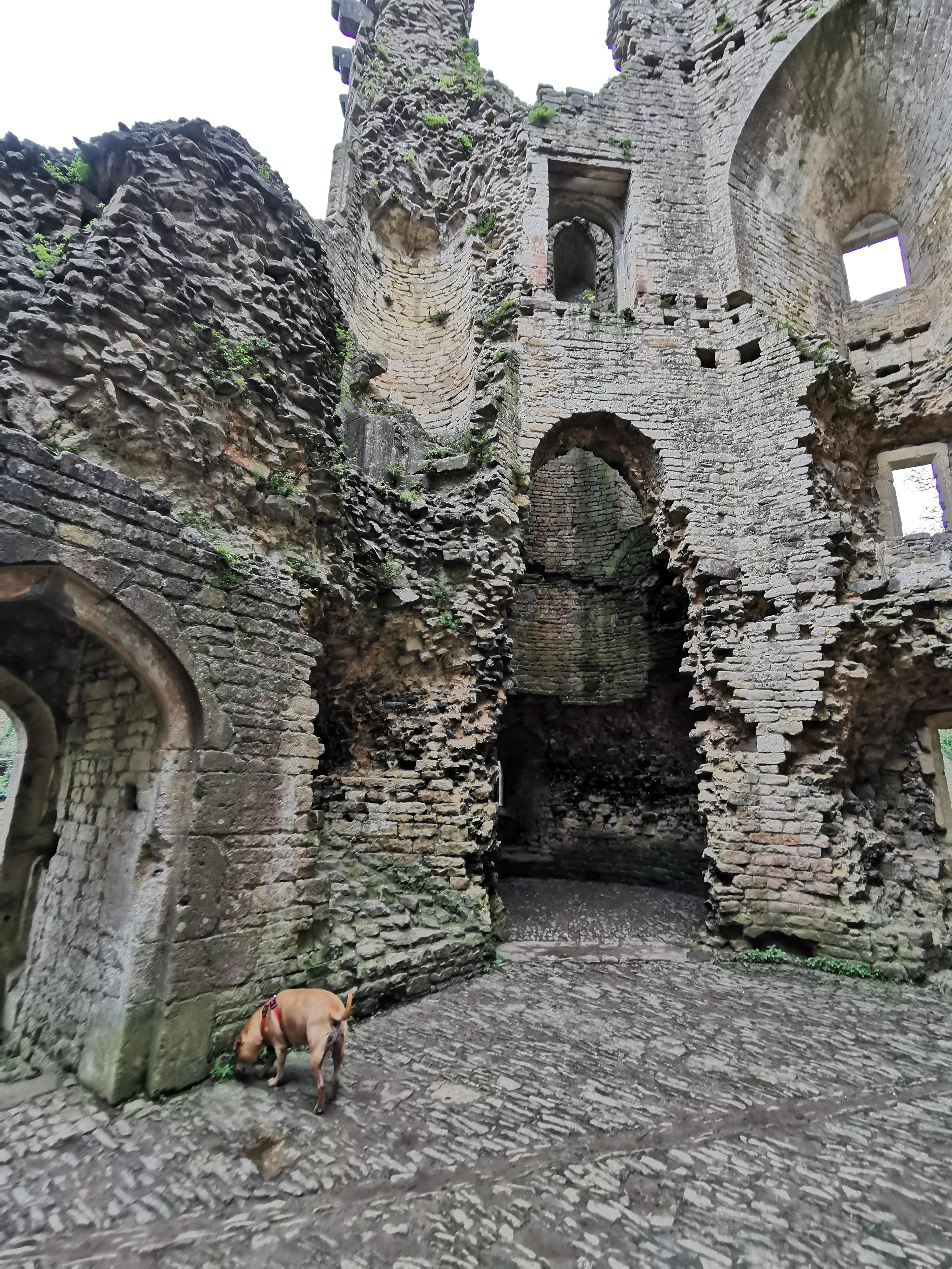 Dog in Nunney Castle