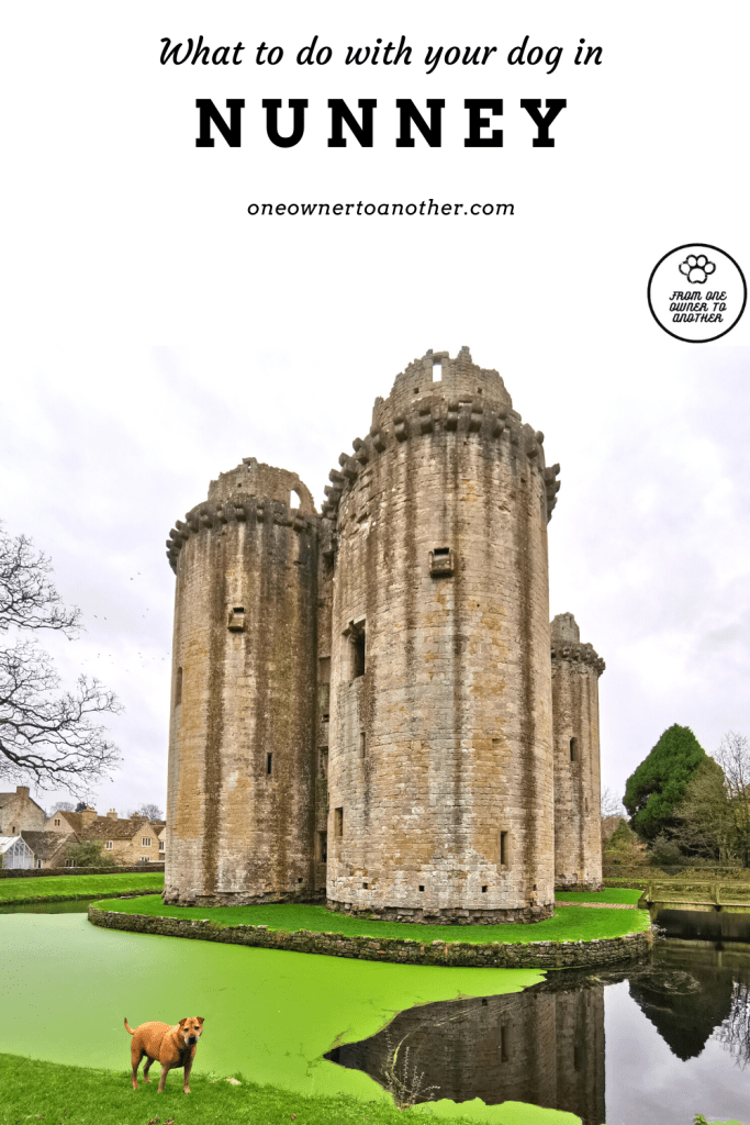 Dog-friendly things to do in Nunney