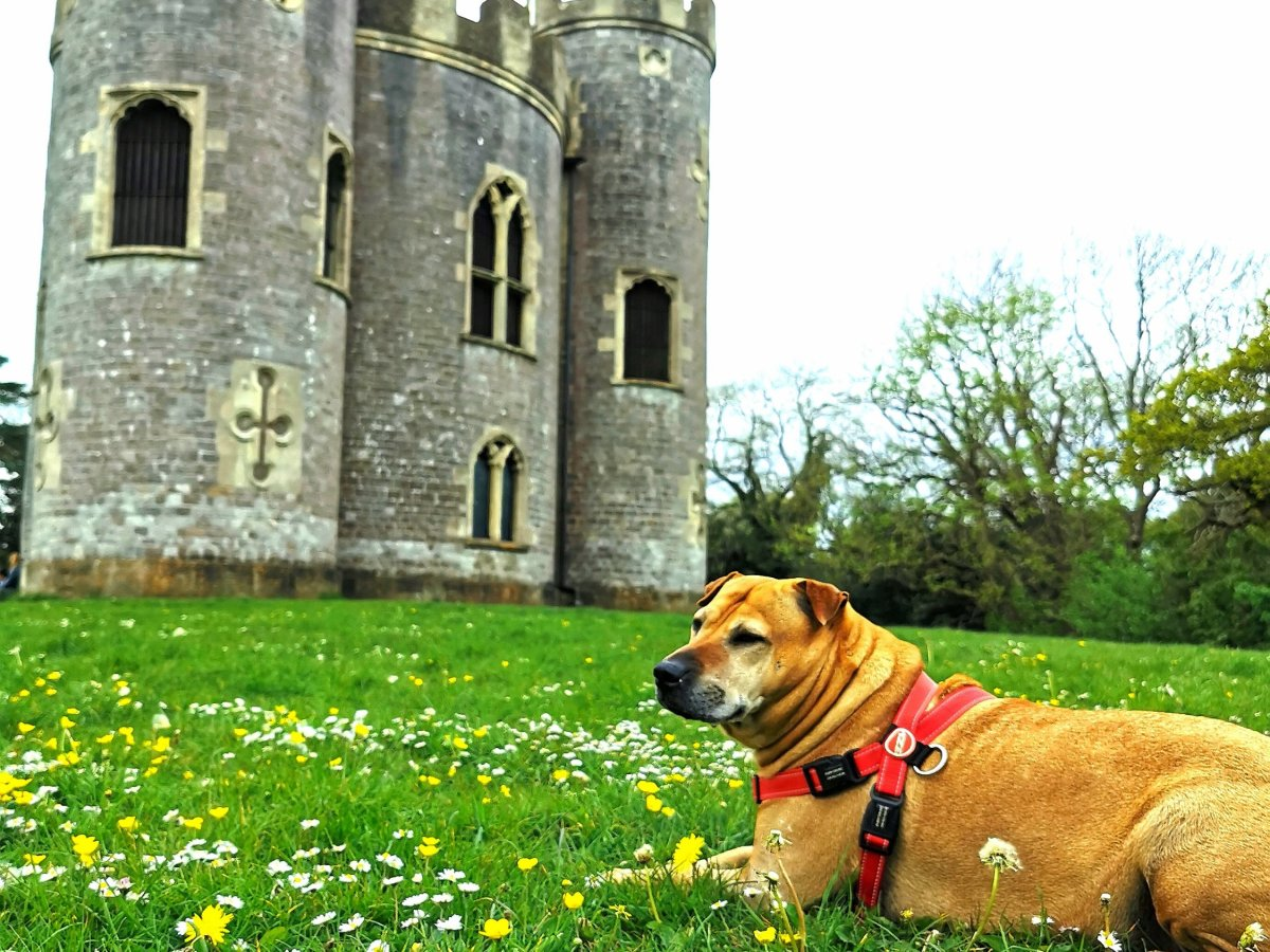 Sash in front of the castle