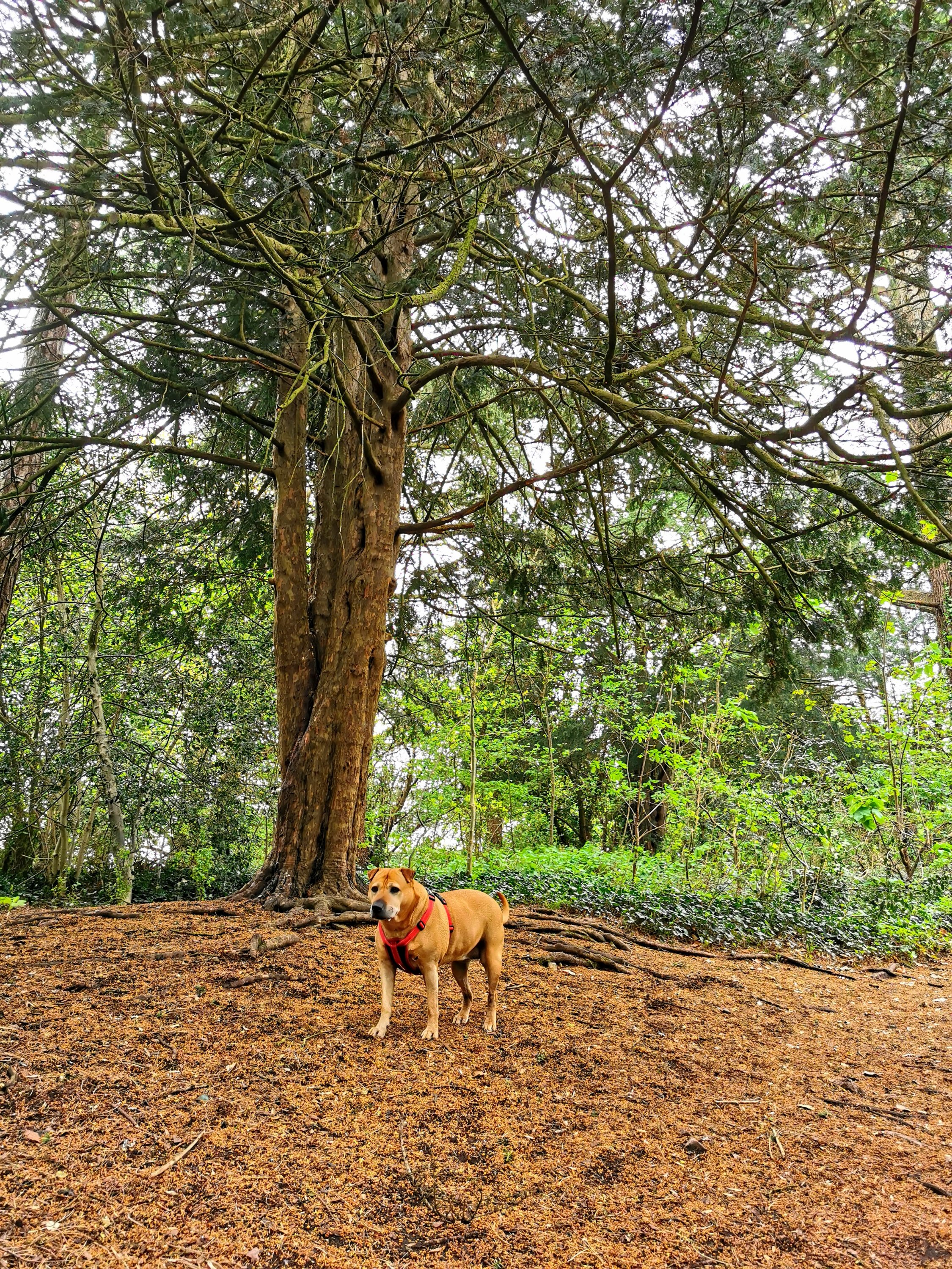 Sash next to a beautiful tree in Blaise Castle Estate