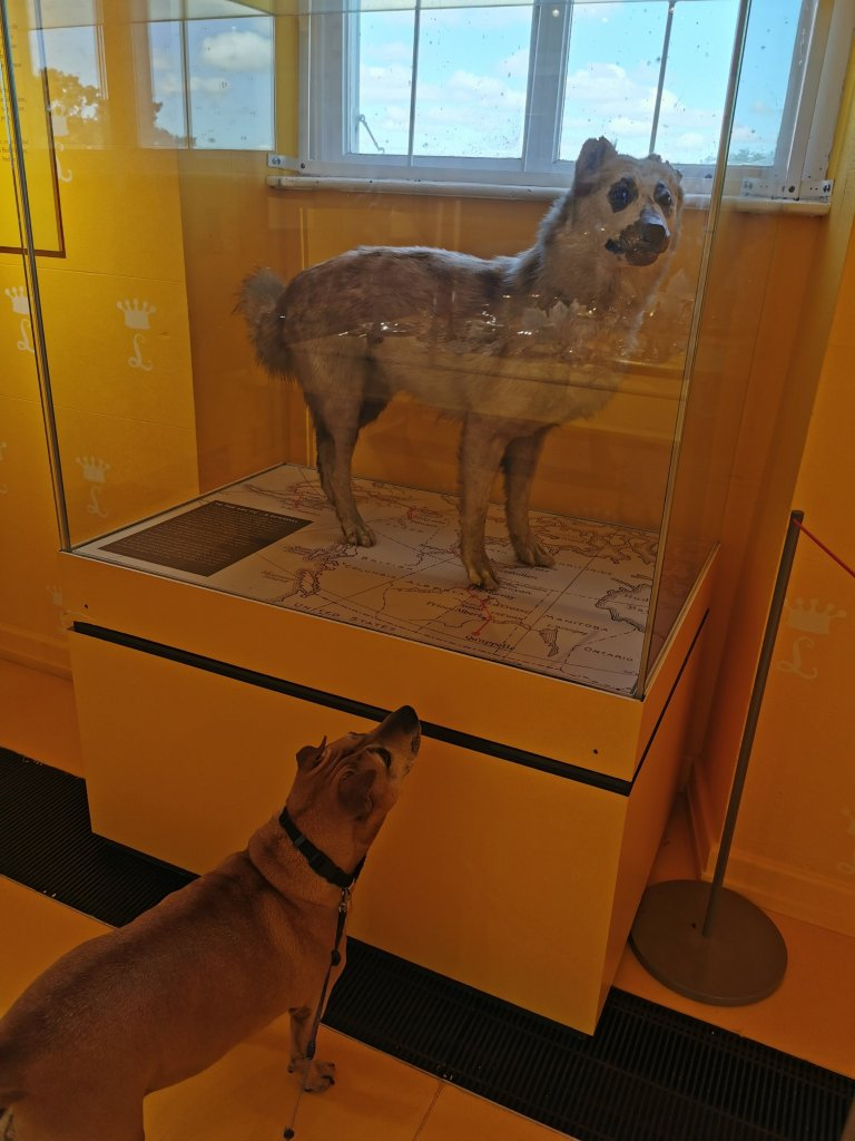 Lowther Castle Taxidermy