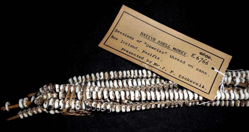 native-shell-money