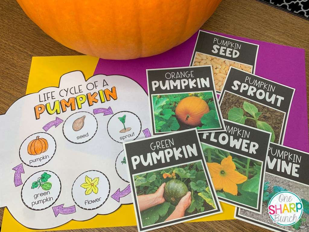 Integrate math, literacy, science and social studies into your pumpkin investigation activities this fall or Halloween! Plus, learn about the life cycle of a pumpkin, where in the world a pumpkin grows, the size of a pumpkin, and more with these pumpkin themed activities and pumpkin crafts perfect for preschool, pre k and kindergarten. #pumpkinweek #pumpkininvestigations #pumpkininvestigationactivities #halloween #fall #pumpkins #pumpkinactivities