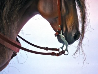 Commission 008 - detail of one ear bridle using 3D printed bit