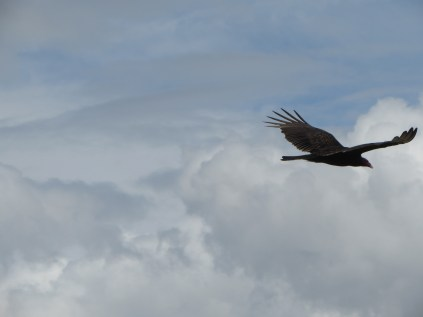 constantly in flight
