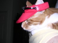 Blurry but you get the drift...Sam's not thrilled with his new hat!