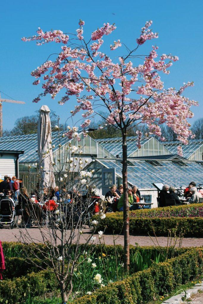 Ogrody zamkowe w Malmo