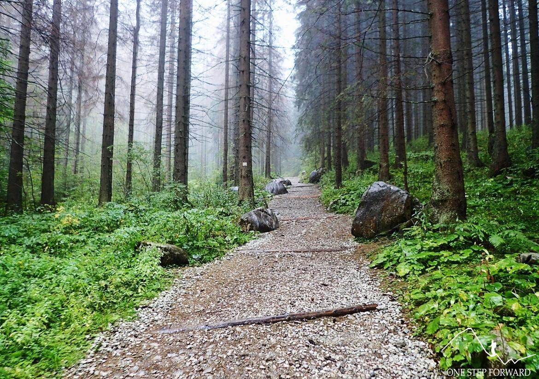 Przechodzimy przez gęsty las