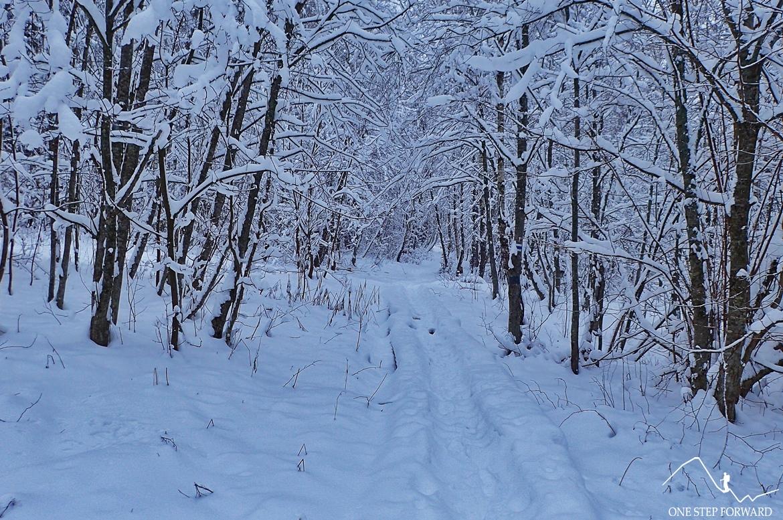 Zima w Bieszczadach - szlak na Tarnicę