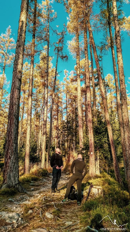 Las w okolicy Starego Smokowca, Słowacja