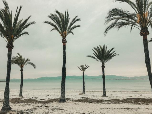 Palmy w El Arenal - Majorka