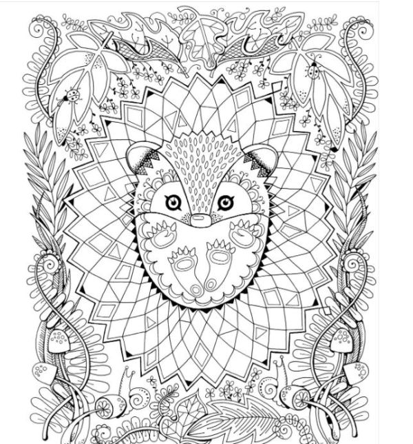 Owl in the Forest Adult Coloring Book