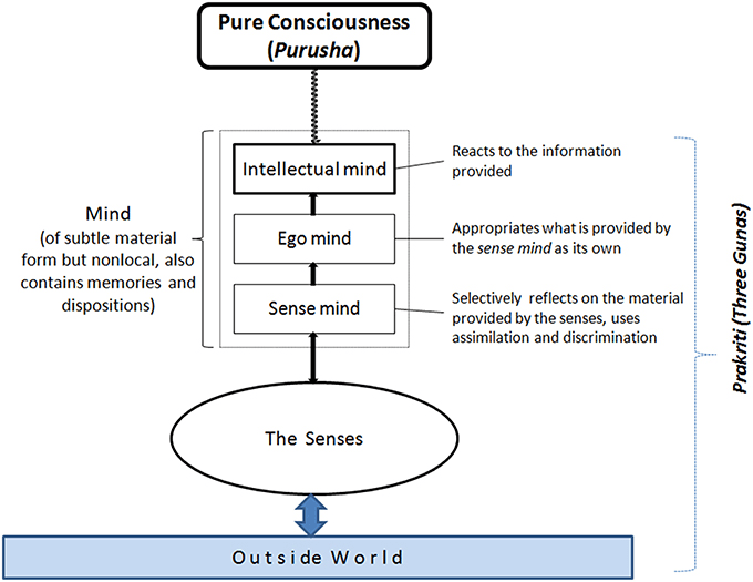 Graphic description of how cognition works according to Samkhya Yoga