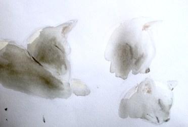 WatercolorCatStudy