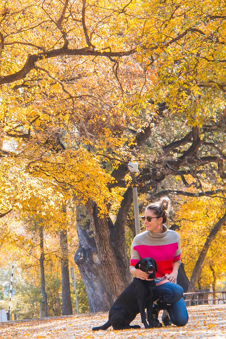 fall wonderland in San Antonio 11