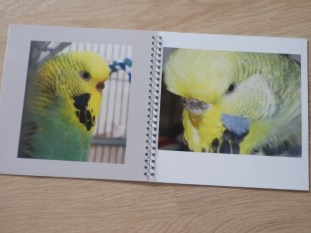 Raspy & Atilla in their memory book
