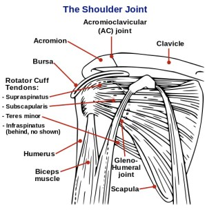 Youth Rotator Cuff Injury Prevention  One on One Physical