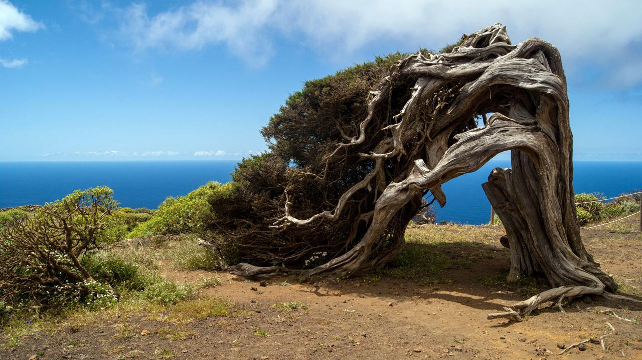 #continuandoàprocura das ilhas espanholas, em julho de 2008, estivemos em fuerteventura, uma ilha que faz parte do arquipélago das canárias. Hiking in El Hierro, Canary Islands | One Two Trek