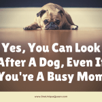 Yes, You Can Look After A Dog, Even If You're A Busy Mom