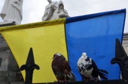 Eurovision pigeons have no ticket