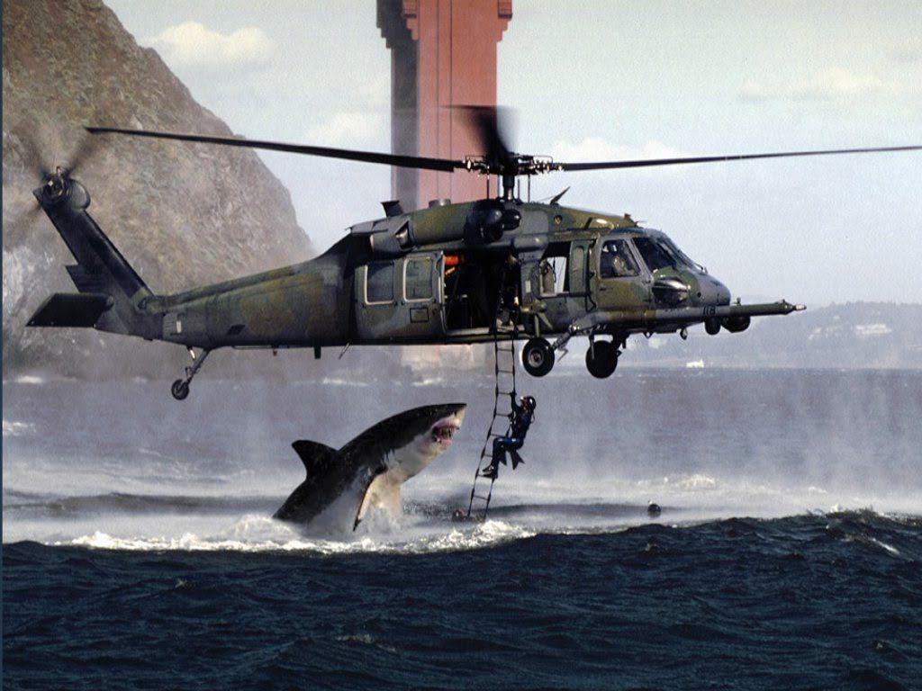 Fake Shark Attack