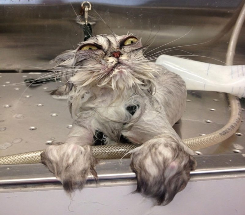 20-hilarious-photos-proving-cats-want-humans-dead-6