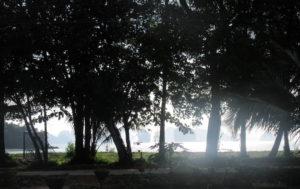 Koh Yao Noi, trees, nature, Ocean, limestone cliffs