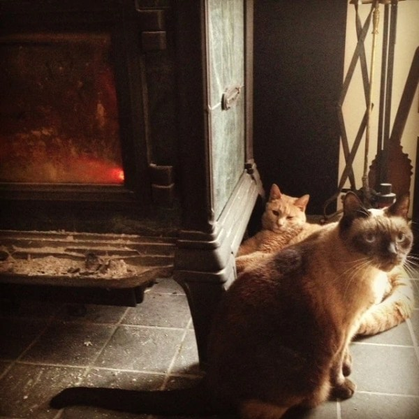 cats-by-woodstove