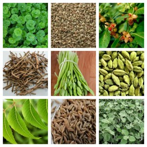 Best Ayurvedic Herbs To Incorporate Into Daily Life