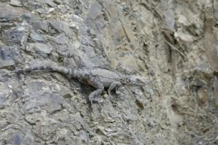 Kollege Reptil