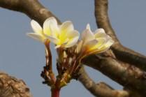 Frühlingsblüte im Januar.