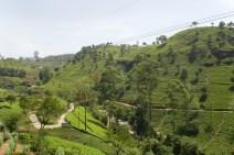 Teeplantage.