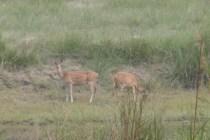 Diese putzigen Tiere stehen ganz oben auf der Speisekarte der 56 Tieger im Park.