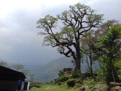 Start Trekking Annapurna-Runde: 19 Tage und 210 km durch den Himalaya.