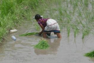 Mühsamens Reispflanzen vor dem Grenzübergang.