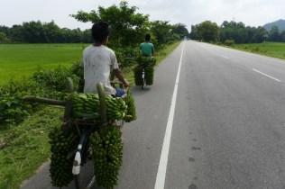 Hundete diese Bananetransporter fahren an dem Mogen zur Sammelstelle, die Jungs sind ordendlich am Keulen.