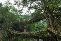 """Doppeldecker """"Living Root Bridge"""", Wahrscheinlich haben die Bäume hier regen Betrieb in beide Richtungen vermutet."""