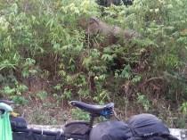 Ist im ersten Moment schon schräg, als plötzlich auf der Nebenstrecke am Strassenrand ein Elefant auftaucht.