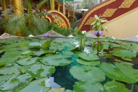 Lotus-Bassin in der Tempelanlage.