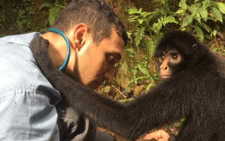 Vet examines spider monkey