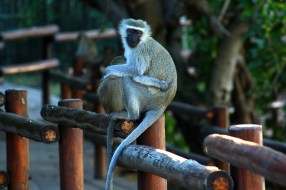 Ryan Huang: I love this photo of mother and child vervet monkeys that I took while working in the Kruger National Park in South Africa. Part of why I love it so much is that it's so familiar and I can relate to them. Like all the other explorers on this site, I love to travel, but sometimes it's nice to be reminded of family back home that's waiting for me to come home and give me a hug of my own.