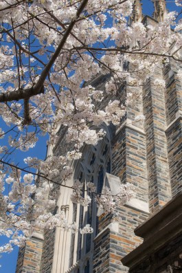 Ryan Huang: I took this photo of the Duke Chapel back in the spring time, when the cherry blossoms were blooming and it was warmer and sunnier. I love this photo for two reasons, 1) it helps me get through the cold winter by reminding me spring is just around the corner, and 2) it's a great example that you really can find beautiful scenery anywhere, even just outside your office.