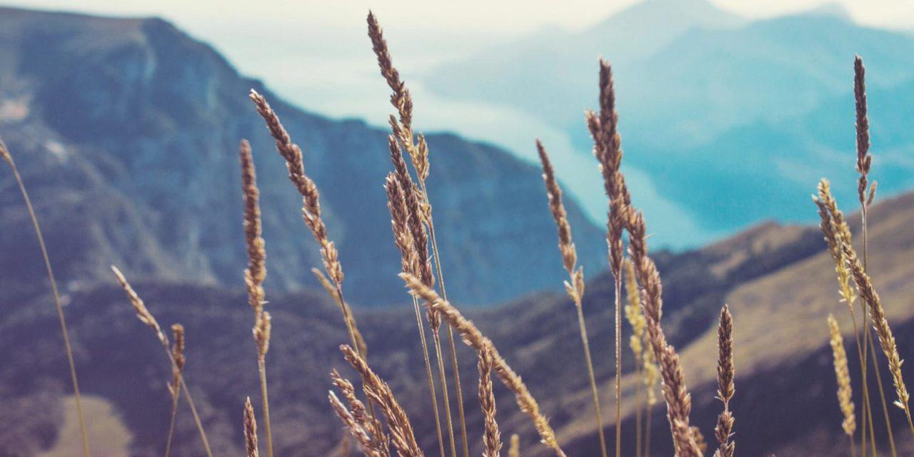 「収穫のビジョン」リック・ジョイナー
