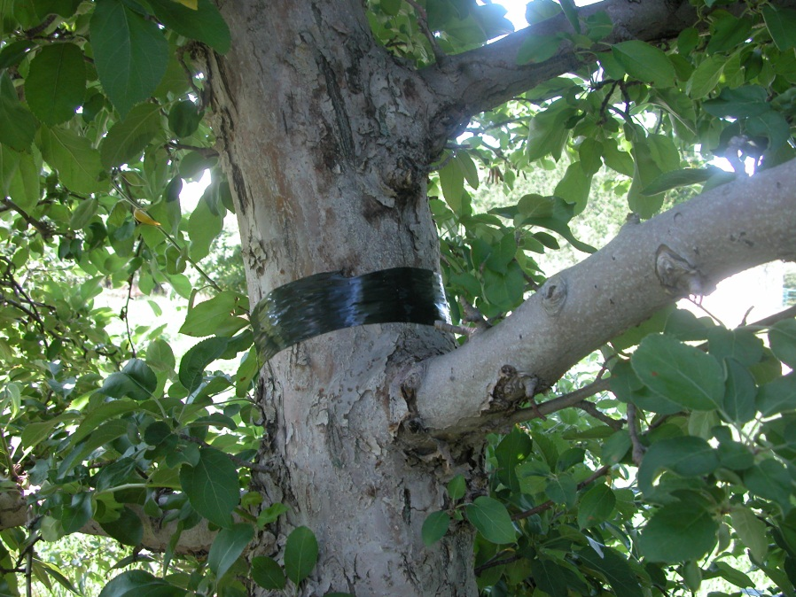 SJS tape