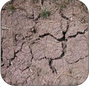 dry soil 1
