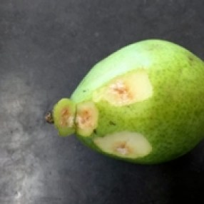 BMSB damage on pear - external. P. Shearer