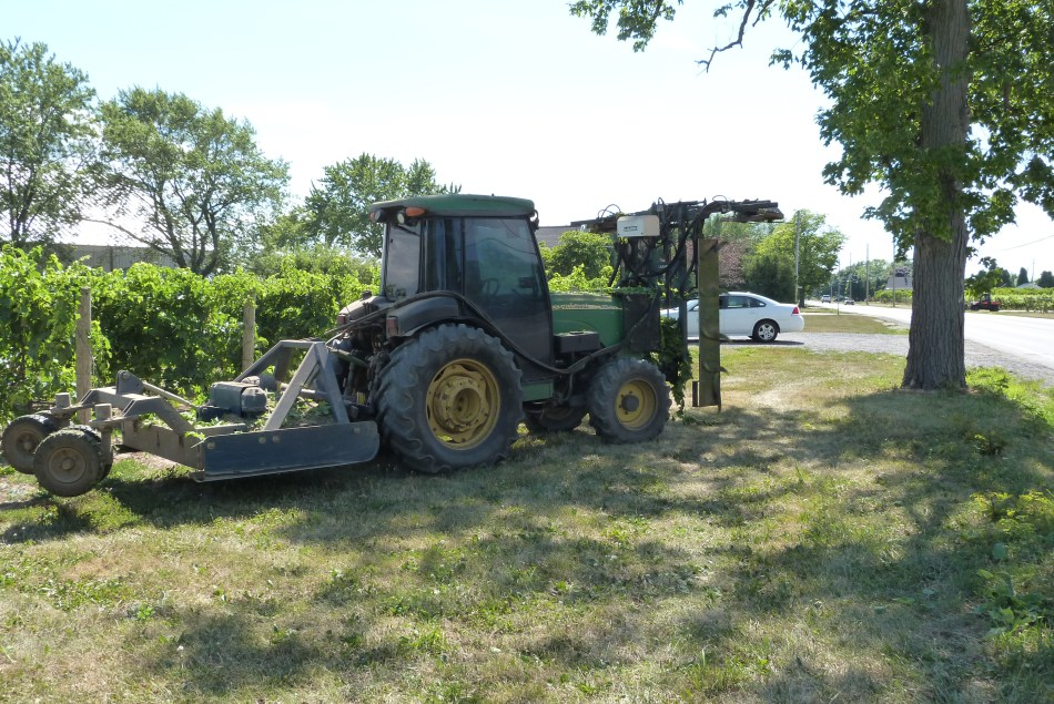 The image shows a large green tractor with a large mechanical hedging attachment being towed behind through rows of vines in a vineyard. The hedging attachment removes leaves from the top of the canopy in a uniform manner.