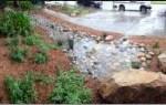 Rain Garden - Sentinel