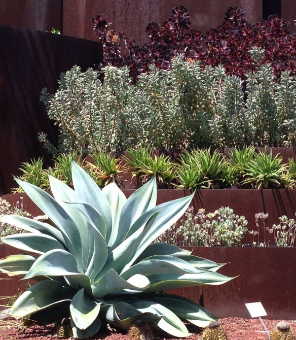 Tiered Succulent Display